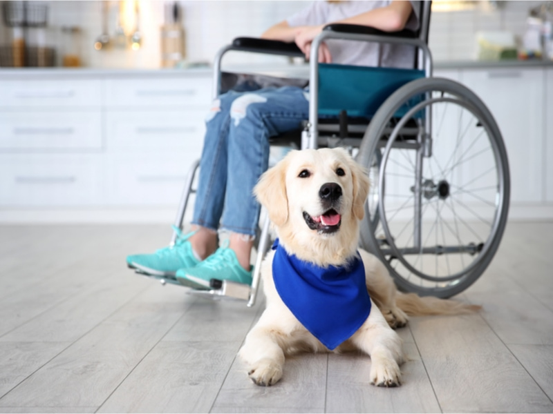 Service Animals and ESAs: Know Your Rights in the Workplace